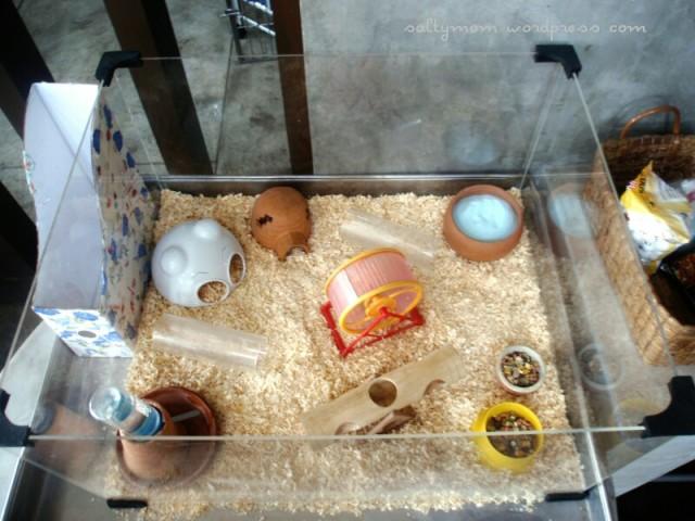 diy hamster cage3