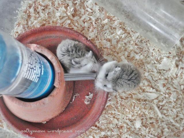 diy hamster cage4