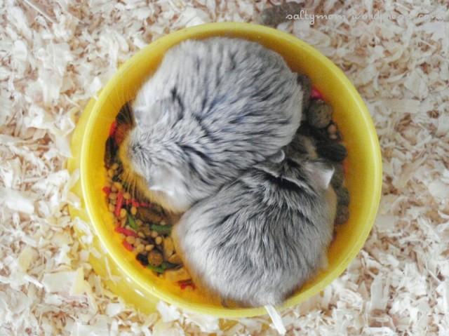 diy hamster cage5