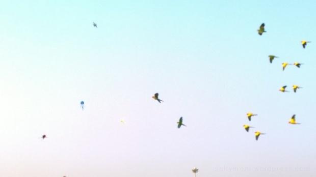 parrots at sanam luang