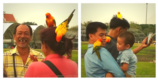 sanam luang birds