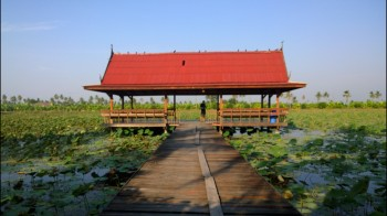 lotus-farm-at-nakhon-pathom-bike-route