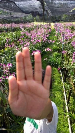 saladin-agro-tour-orchid-farm-nakorn-pathom-saltymom-net