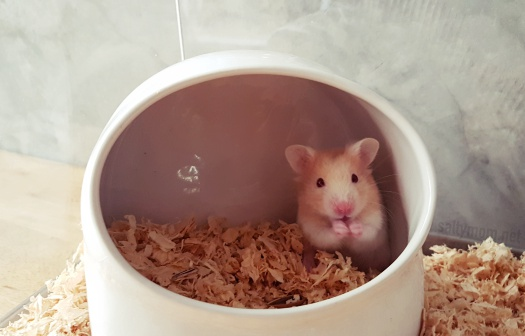 hamster bed from ceremic pot.jpg