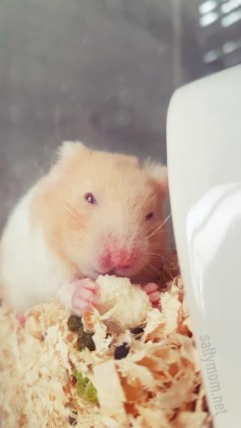 hamster secret hideout.jpg