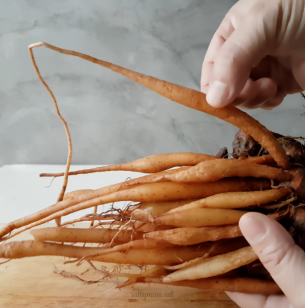 fingerroot krachai thai vegan curry noodle